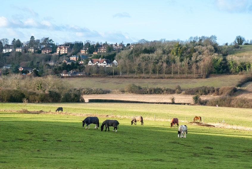 Pewsey Down in the Surrey Hills
