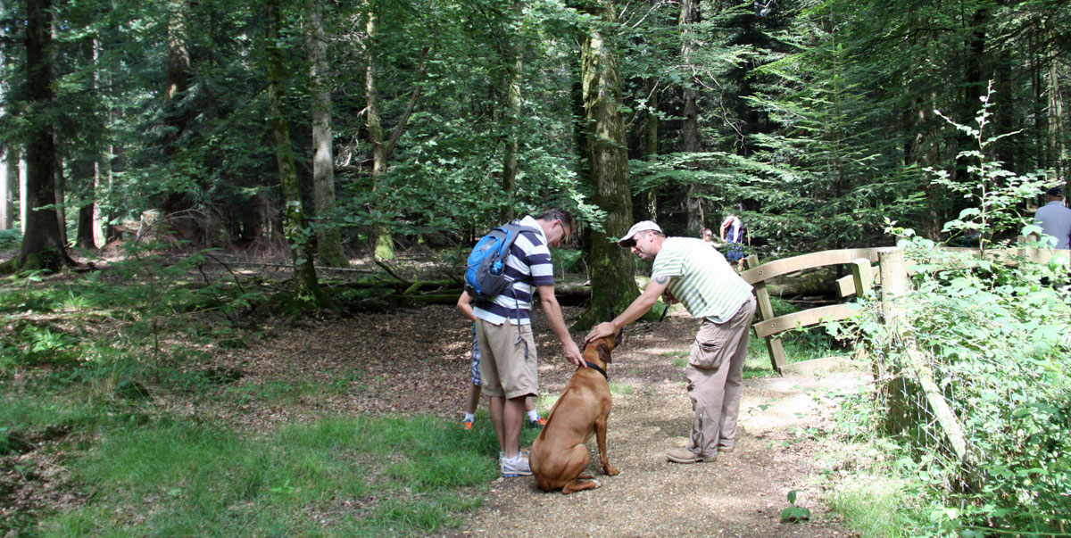 New Forest pet friendly holidays